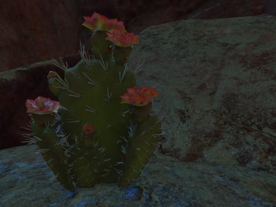 Kaktus wollte noch ein Bild von sich haben ... ;-)