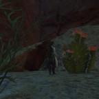 * Mein KLEINER grüner Kaktus ........lalalalalalaaaaa ..... * ... ;-)