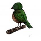 Vogel Versuch1