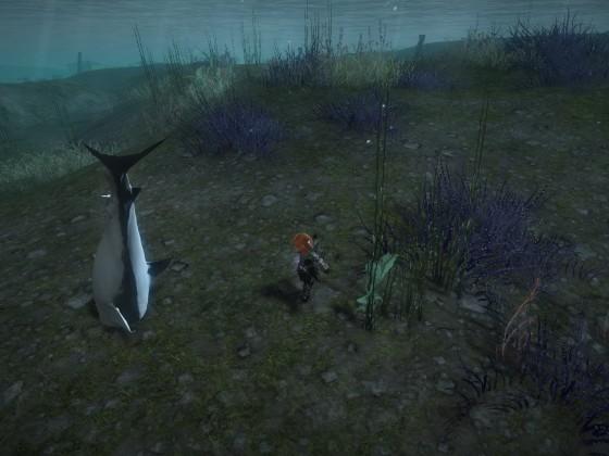 Ich glaube mein Hai ist kaputt