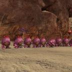 Freitags Pink Quaggan Chestfarmrun